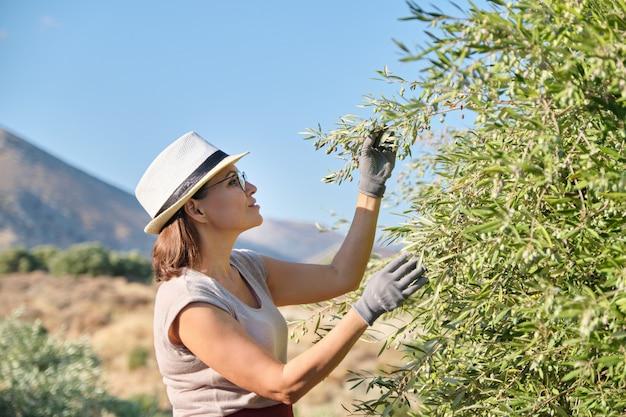 Arbeiterin einer olivenfarm, hintergrundolivengarten in den bergen