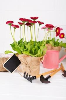 Arbeitsbereich, frühlingsblumen pflanzen. gartengeräte, pflanzen in töpfen und gießkanne auf weißem tisch