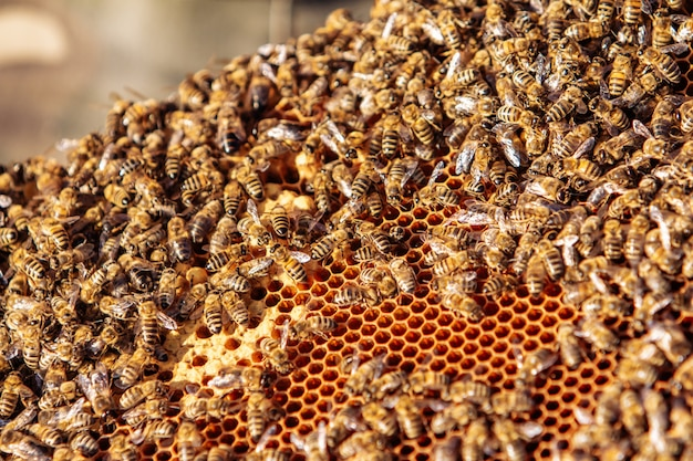 Arbeitsbienen auf bienenwabe