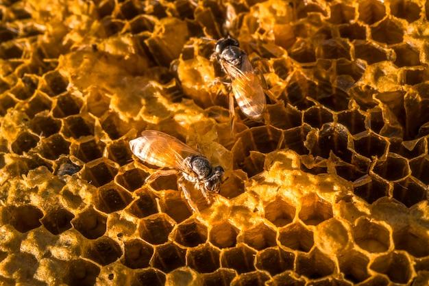 Arbeitsbienen auf der naturwabe mit süßem honig.
