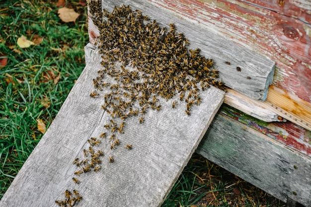 Arbeitsbienenkolonie auf dem bienenstock nahaufnahme. blick auf die imkerei und honig bekommen. schwarm bienenarbeiter, der auf einem bienenstock sitzt.