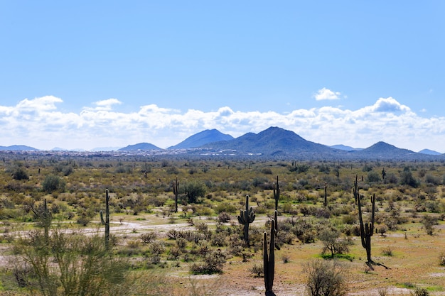 Arizona-gebirgszug mit saguarokaktus-, himmel- und lichtwolken und anderen wüstenpflanzen.