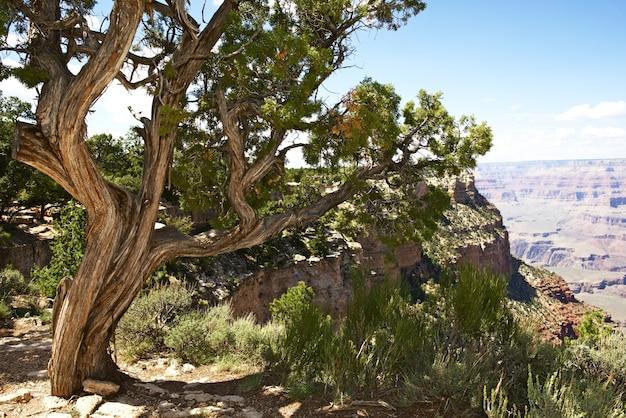 Arizona natur