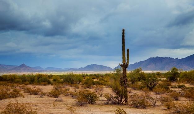 Arizona-wüstenpanoramalandschaft im saguarokaktus