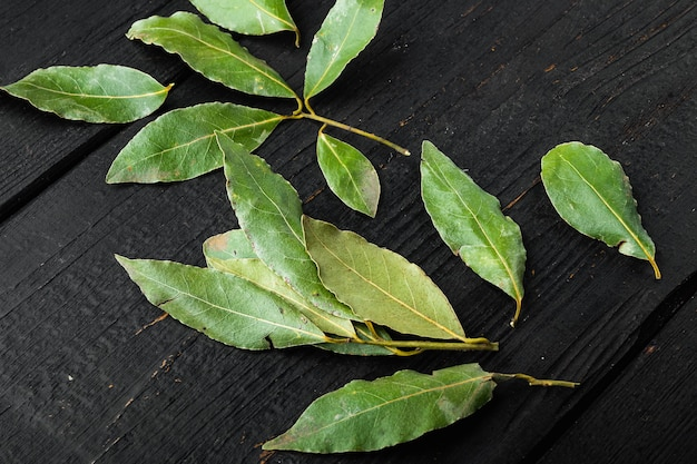 Aromatische bio-lorbeerblätter gesetzt