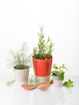 Aromatische kräuter zum kochen oder dekorieren. fenchel, rosmarin, pfefferminze. copyspace