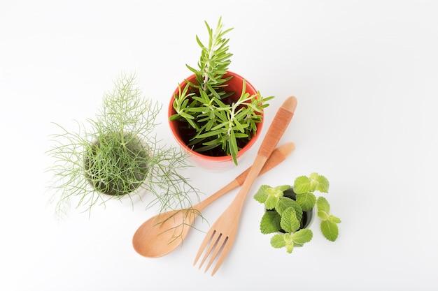 Aromatische kräuter zum kochen oder dekorieren. fenchel, rosmarin, pfefferminze