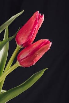 Aromatische weinartige blüten mit grünen blättern im tau
