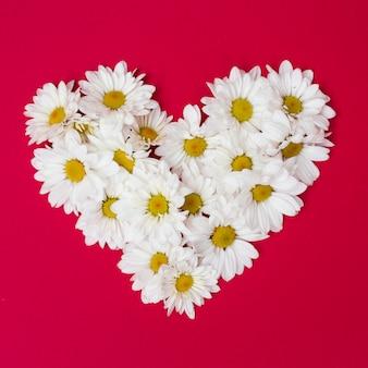 Arrangement von Gänseblümchen in Herzform