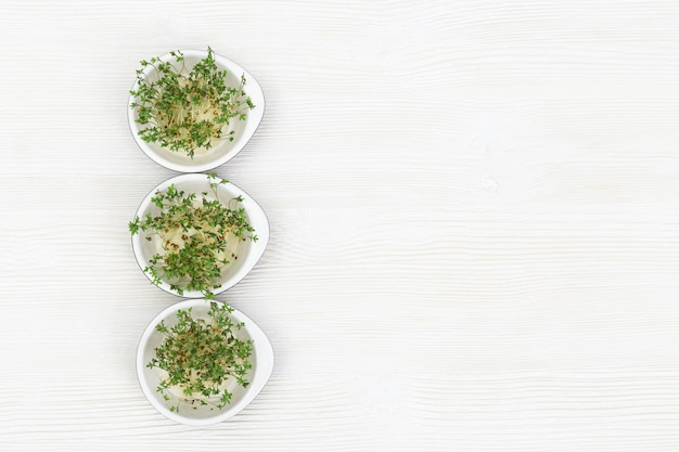 Arugula, der in der kleinen runden schüssel, moderner gesunder salat wächst. mikrogrüns für das essen der rechten und vegetarischen biokost auf weißem holztisch. ansicht von oben.