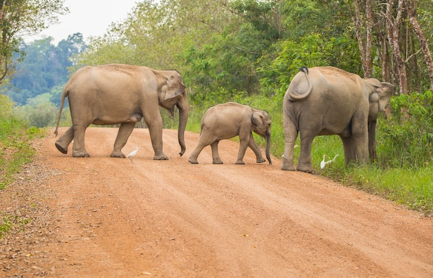 Asia wilde elefanten ist so süß