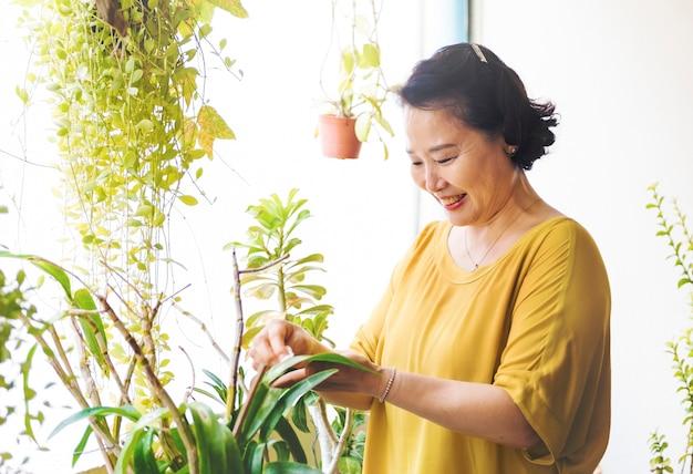 Asiatinhände, die houseplantsblätter abwischen