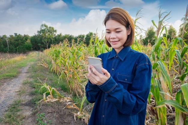 Asiatinlandwirt, der das technologiemobile auf dem maisgebiet einsetzt