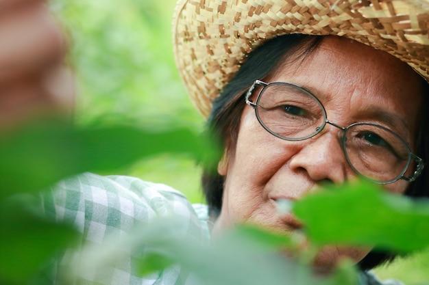 Asiatische ältere frau mit brille sie baut bio-gemüse an, um es zu hause zu essen. sie sammelt gemüse zum kochen. ernährungssicherheitskonzept während der coronavirus-pandemie, gartenarbeit für ältere menschen