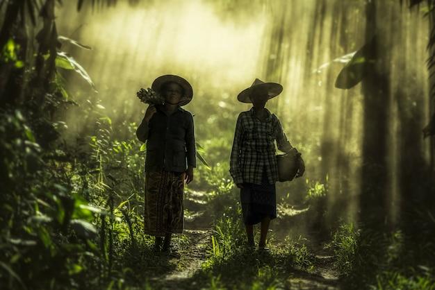 Asiatische alte frau, die im regenwald arbeitet
