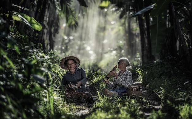 Asiatische alte frau, die im regenwald, thailand arbeitet