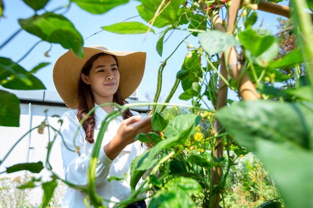 Asiatische bäuerin kümmert sich um ihren bio-gemüsegarten und pflegt frisches gemüse für ihren haushalt.
