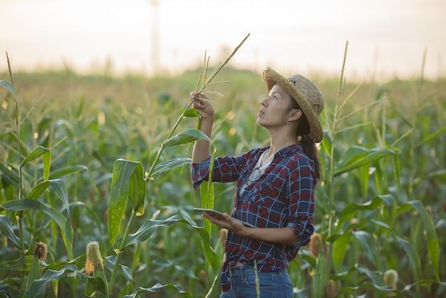 Asiatische bäuerin mit digitaler tablette im maisfeld, schöner morgensonnenaufgang über dem maisfeld. grünes maisfeld im landwirtschaftlichen garten und licht scheint sonnenuntergang am abend berghintergrund