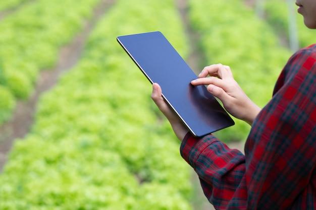 Asiatische bauernmädchenhand unter verwendung der digitalen mobilen tablette zum überprüfen des frischen salatsalats der grünen eiche