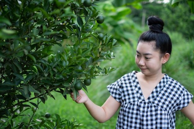 Asiatische frau des jungen gärtners lächelnd und pflückend thailändische honig-mandarinenorangen im garten-, glücks- und gesunden lebensstilkonzept