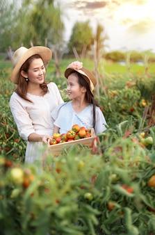 Asiatische frau, die tomaten erntet