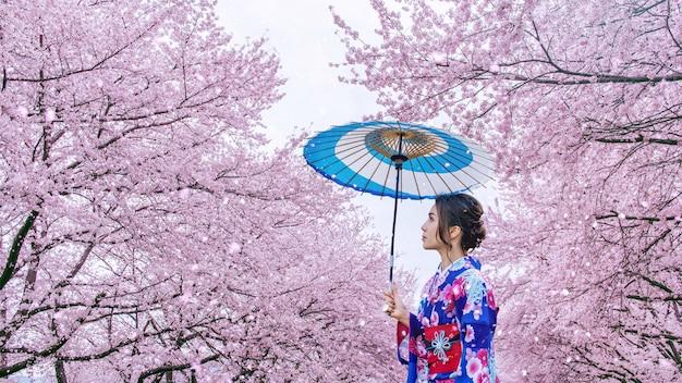Asiatische frau, die traditionellen japanischen kimono und kirschblüte im frühjahr, japan trägt.