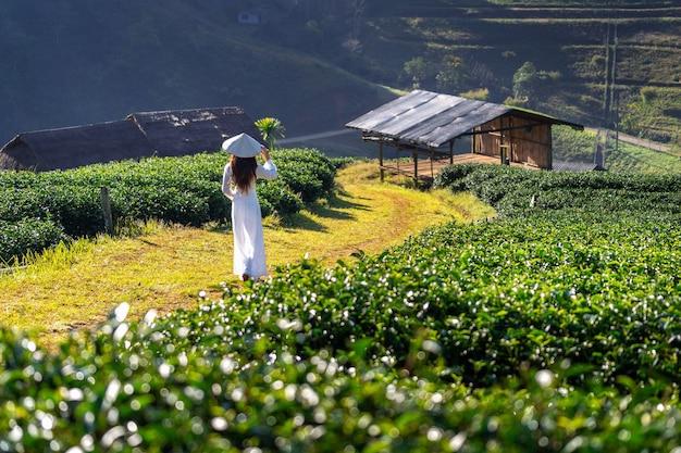 Asiatische frau, die vietnamkultur traditionell im grünen teefeld trägt.