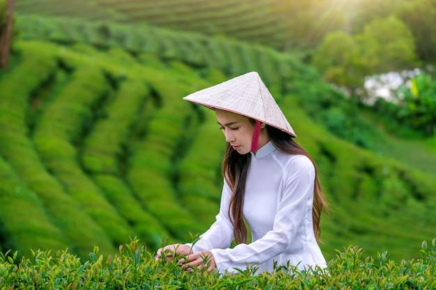 Asiatische frau, die vietnamkultur traditionell in der teeplantage trägt