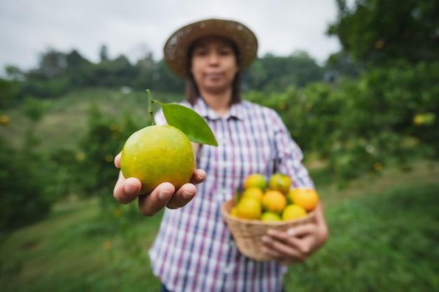 Asiatische gärtnerin, die einen korb von orangen hält, die orangen im orangenfeldgarten in der morgenzeit zeigen und geben.