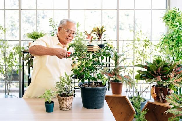 Asiatische großväter im ruhestand lieben es, sich um die pflanzen zu kümmern, indem sie zweige von pflanzen mit einer gartenschere schneiden. aktivitäten im ruhestand.
