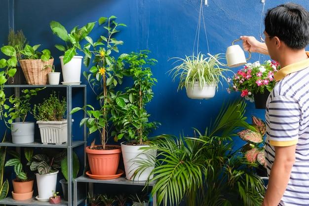 Asiatische mannbewässerungsanlage zu hause, geschäftsmann, der um chlorophytum comosum (spinnenanlage) im weißen hängenden topf nach der arbeit, am wochenende sich kümmert