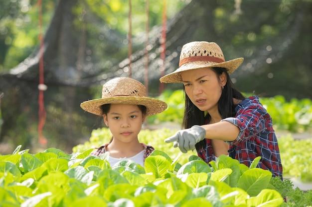 Asiatische mutter und tochter helfen zusammen, das frische hydroponische gemüse auf dem bauernhof, konzeptgartenbau und kindererziehung des landwirtschaftlichen haushalts im familienlebensstil zu sammeln.