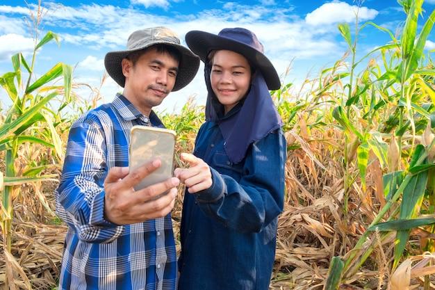 Asiatische paarlandwirte, die smartphone am maisbauernhof verwenden