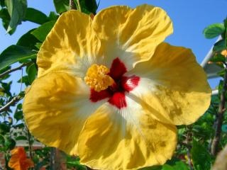 Asiatische vielfalt von rosen malve