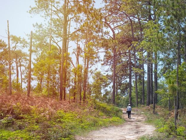 Asiatische wanderer gehen im sommer zwischen den grünen pfahlwäldern spazieren. tourist gehen auf wegweg im laub in südostasien.
