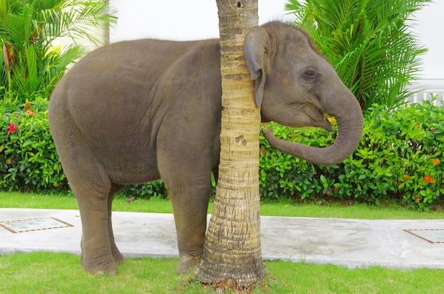 Asiatischer elefant auf grünem garten