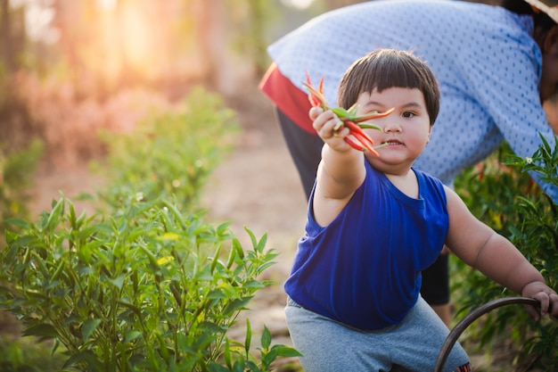 Asiatischer junge ist landwirtschaft