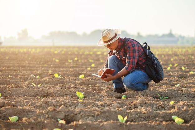 Asiatischer junger landwirt, der auf dem gebiet des tabakbaums arbeitet