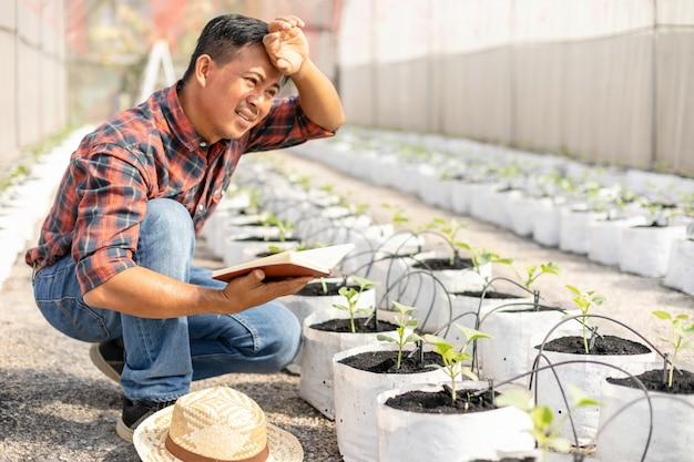 Asiatischer junger landwirt, der im bauernhof von jungen grünen melonen arbeitet