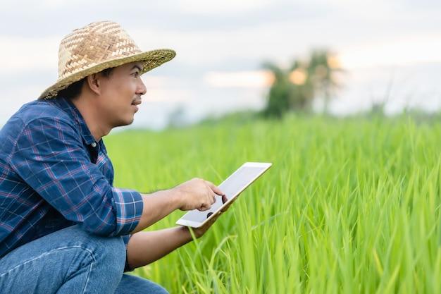 Asiatischer junger landwirt, der tablette am grünen reisfeld verwendet. einsatz von technologie für ein intelligentes bauernkonzept