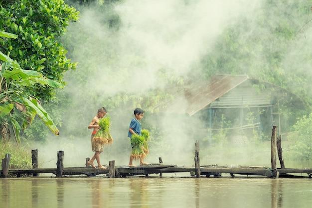 Asiatischer kinderlandwirt auf reis kreuzen die hölzerne brücke vor dem gewachsenen im reisfeld.