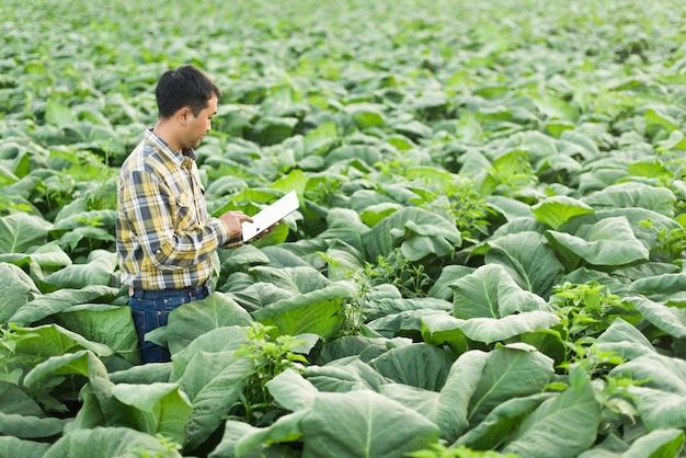 Asiatischer landwirt, der anlage in der tabakfarm erforscht. landwirtschafts- und wissenschaftlerkonzept.