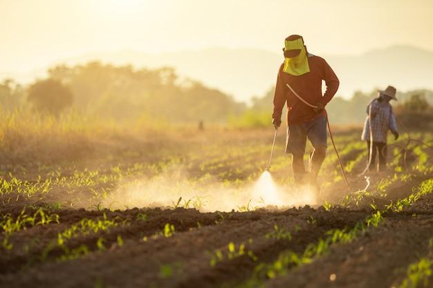 Asiatischer landwirt, der auf dem gebiet arbeitet und chemikalie sprüht