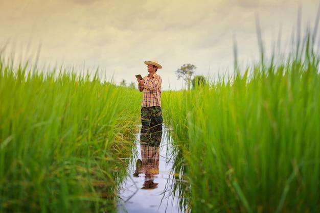 Asiatischer landwirt, der digitales tablet auf einem grünen reisgebiet, intelligentes technologielandwirtschaftskonzept verwendet