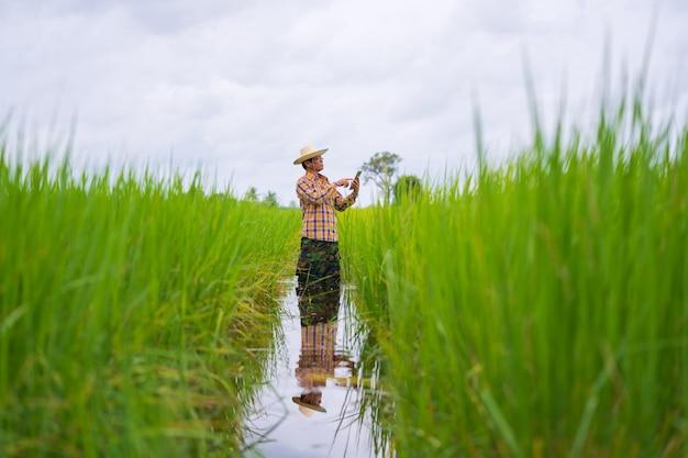 Asiatischer landwirt, der digitales tablet auf einem grünen reisgebiet verwendet