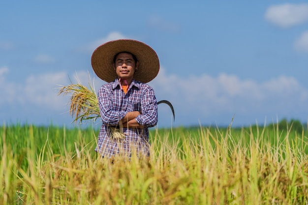 Asiatischer landwirt, der im reisfeld unter blauem himmel arbeitet