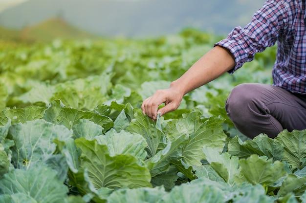Asiatischer landwirt, der junge sämlinge in seinem bauernhof im gemüsegarten hält