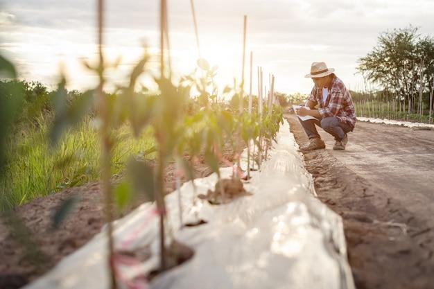 Asiatischer landwirt, der notizbuch hält und sein werk oder gemüse (paprikabaum) überprüft