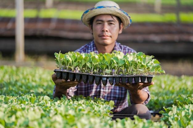 Asiatischer landwirt im hut, der junge sämlinge in seinem bauernhof im gemüsegarten hält