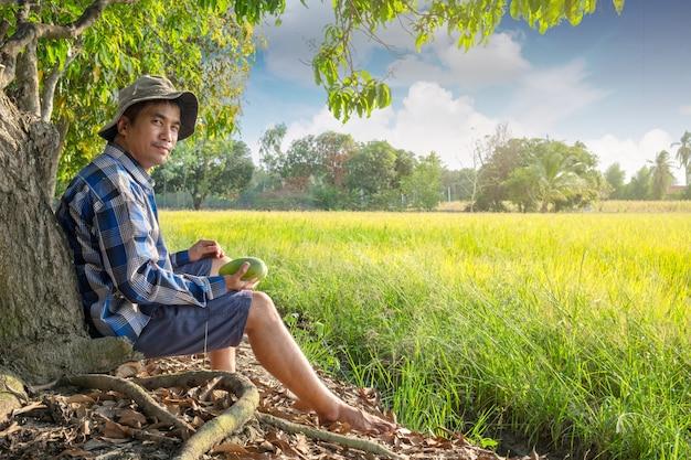 Asiatischer landwirtmann, der unter mangobaum am reisbauernhoffeld bei thailand sitzt